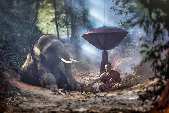 Buddhist monks and elephants. - Pinned by Mak Khalaf Buddhist monks and elephants. Travel asiaasianbeautifulbuddhabuddhismbuddhistchangcountrycultureelephantgreenindialightmonkmonksoldreligionsurintemplethaithailandtourismtravel by Pitakchatr:
