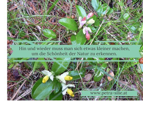 Hin und wieder muß man sich etwas kleiner machen um die Schönheit der Natur zu erkennen.