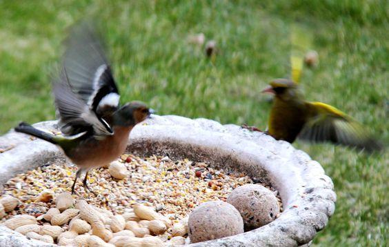 vogel gevecht