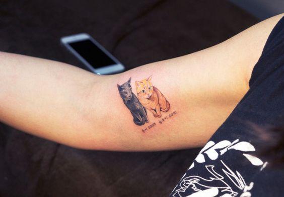 Los tatuajes gatunos son la forma más dulce de quebrantar la ley en Corea del Sur | IsPop