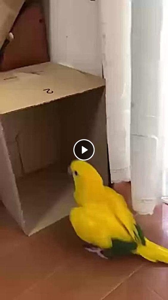Pássaro se diverte com brinquedo só alegria.