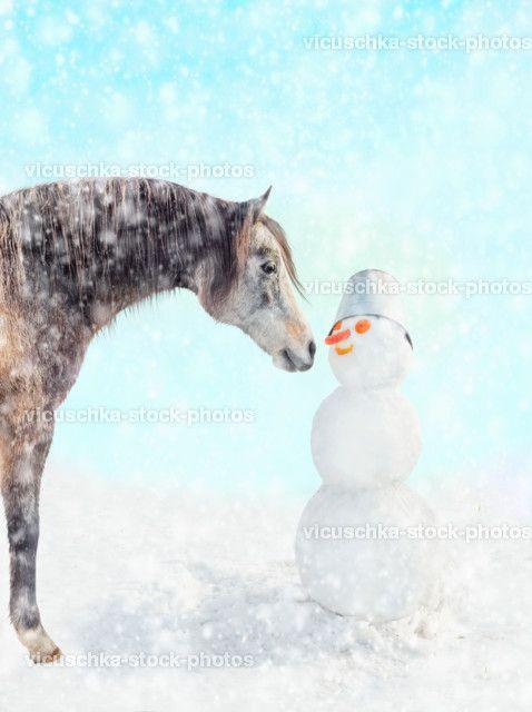pferd schneemann schnee pferd weihnachten portr t. Black Bedroom Furniture Sets. Home Design Ideas