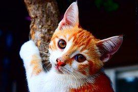 Katze, Tier, Natur, Junge Katze