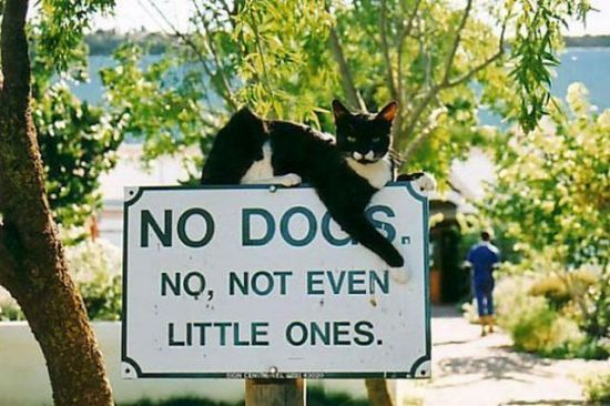 No dogs allowed...