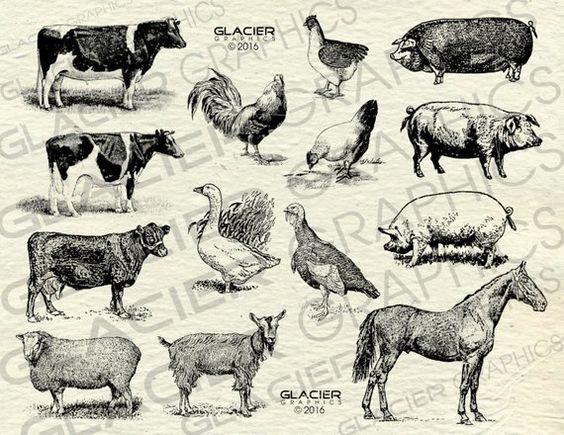 Vintage Farm Animal Illustrations Printable Farm Animals Etsy Animal Clipart Animal Illustration Farm Animals
