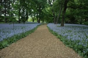 Brooklyn Botanic Garden's 100th Anniversary | Garden Design Spanish bluebells