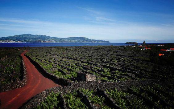 Paisagem da Cultura da Vinha da Ilha do Pico. Açores, Portugal