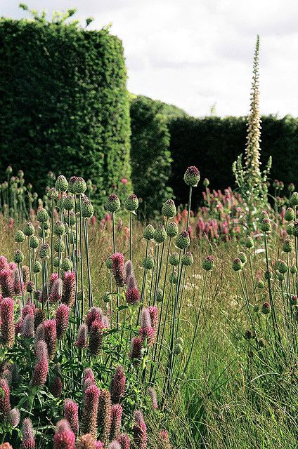 Piet oudolf at bury court by c j harris via flickr for Gardening with grasses piet oudolf