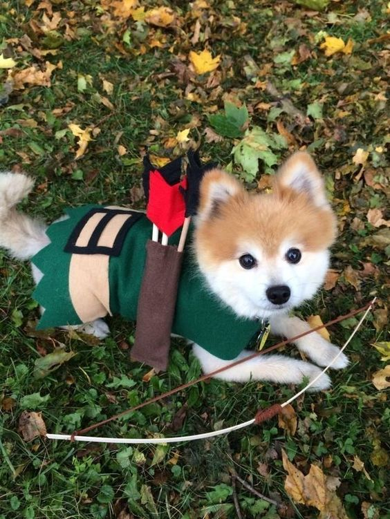 Robin Hood. | 27 Dog Halloween Costumes You'll Want To Steal For Yourself