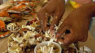 Crab Recipes from The Baltimore Sun (Dips, Spreads, Soups, Salads, Appetizers, Crab Cakes, Entrees)