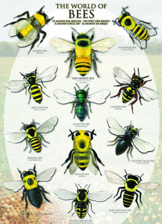 EU food agency says three pesticides harm bees as ban calls grow