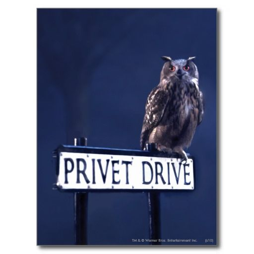 Privet Drive Post Card so please read the important details before your purchasing anyway here is the best buyReview          Privet Drive Post Card please follow the link to see fully reviews...