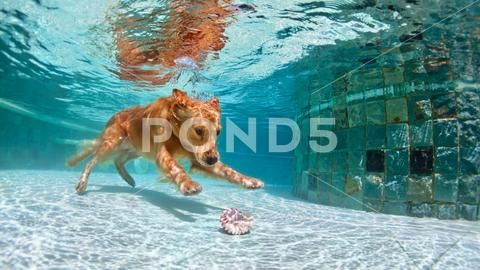 Dog Diving Underwater In Swimming Pool Stock Photos Ad