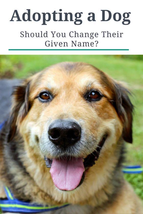 Adopting A Dog Should You Change Their Given Name Dog Names