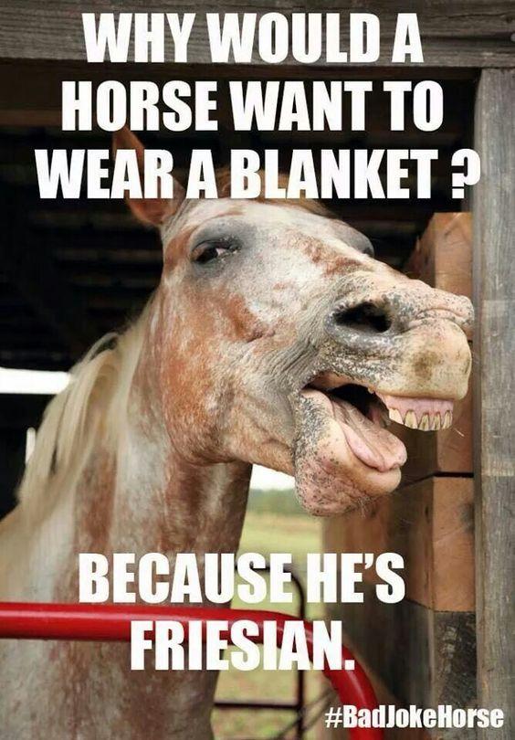 Horse jokes - photo#29