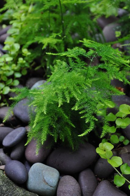 3 beautiful birdbath planters, gardening, outdoor living, pets animals, I love the way these dark pebbles set of the fresh green of the ferns You can find something similar at the dollar store