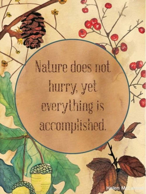 Nature does not hurry, yet everything is accomplished. Always loved this one. Patience :
