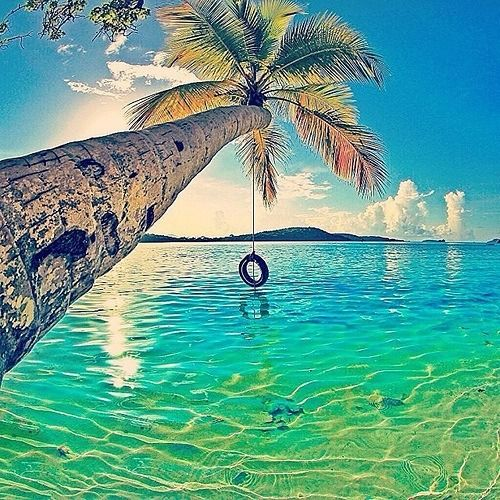 Tire swing hanging from a palm tree over crystal blue for Swing over water