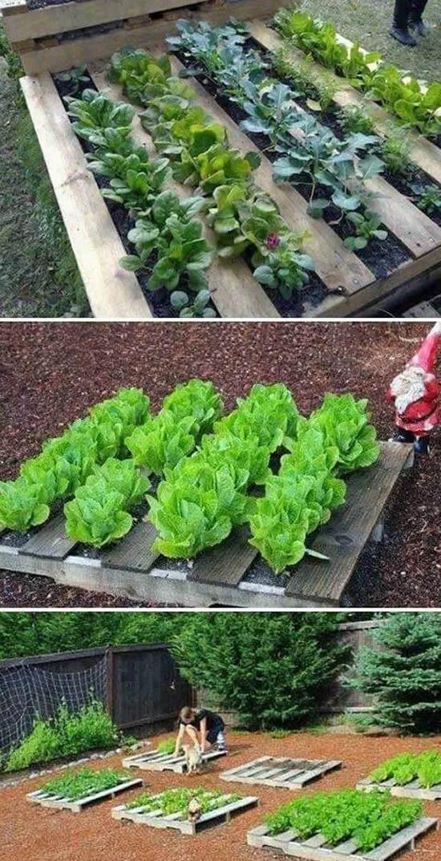 Ideias Para Horta Caseira Como Plantar E Cuidar Decoration
