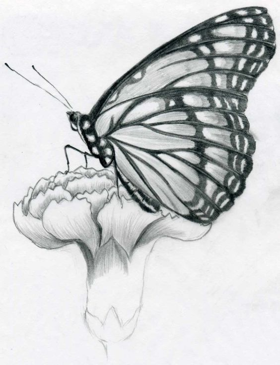 Butterfly Pencil Drawings Pencil Drawing Pictures Of Flowers