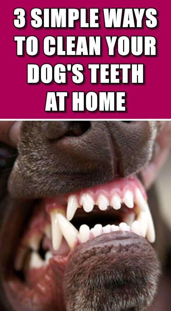 How To Clean Your Dog S Teeth At Home Dog Teeth Dog Teeth Cleaning Dog Breath