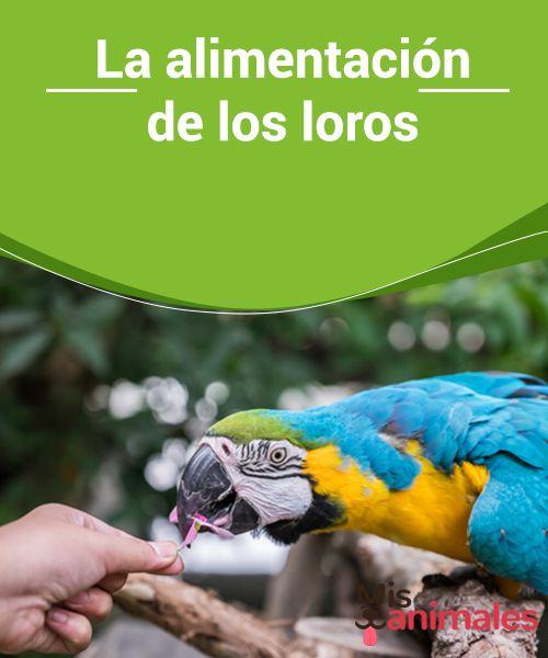 La Alimentacion De Los Loros My Animals Loros Mascotas Loro Animal