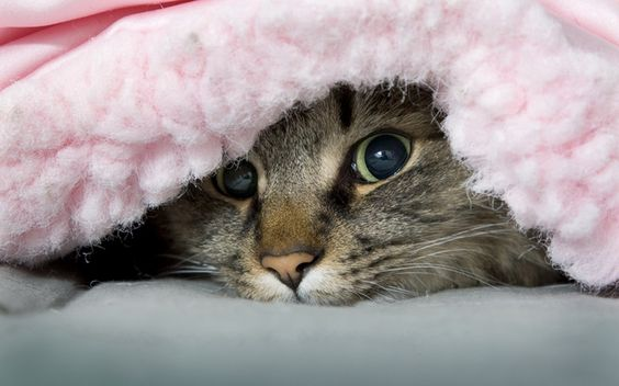 Stress Management for Cats