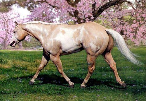 Midas Midas Dreamhorse Com Horse Id 1775893 Western