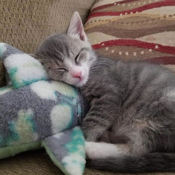 World Sleep Day 7 Cute Sleepy Cats Who Just Can T Stay Awake Videos Cattime Tiny Kitten Kittens Pretty Cats