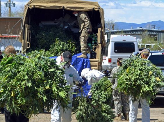 More than 300 plants were removed from a single home.