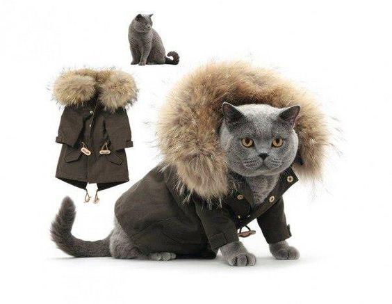winter wear for indoor felines