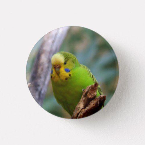 Budgie Budgerigar Parakeet Bird Pattern Button Refrigerator Magnet
