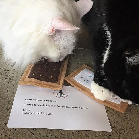 Repost from @meow_york_kitties Oh my goodness! Look what we got! Thank you SO much @tinaf78 for the awesome gifts! Who doesn't like pop tarts!? #Claimed #GiveBack #KindnessWins and thank you George and Wheezy for introducing us to@madebyfidothecat! ***** Happy to see Neyland and Knox are enjoying their Chocolate Brownie and Classic Vanilla Toaster Tart treats. Thanks to Neyland and Knox's mom for sharing the picture. || Handmade by Fido the Cat