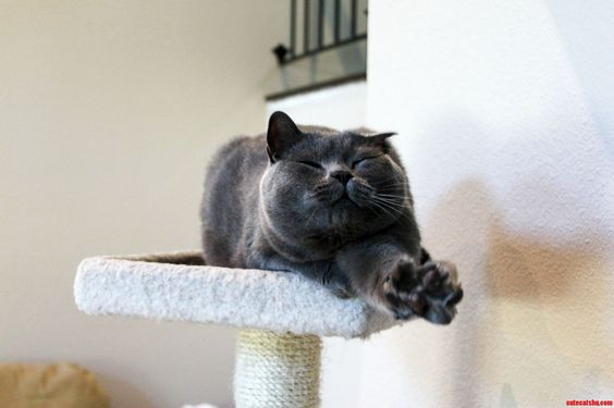 And Reach - http://cutecatshq.com/cats/and-reach/