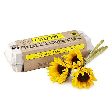 Sunflower Garden Grow Kit Quality Sunflower Variety Mix Seed Kit With Images Unusual Birthday Gifts Grow Kit Seed Kit