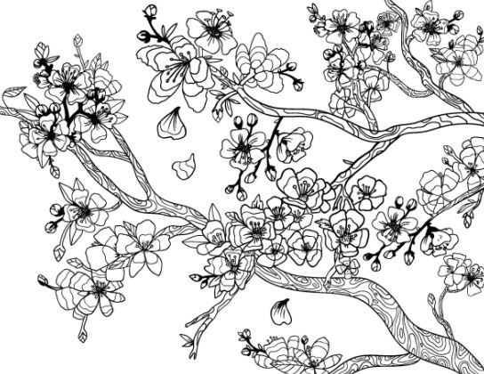Coloring Page Base Tree Coloring Page Cherry Blossom Art