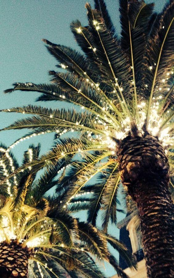 Palma y luz
