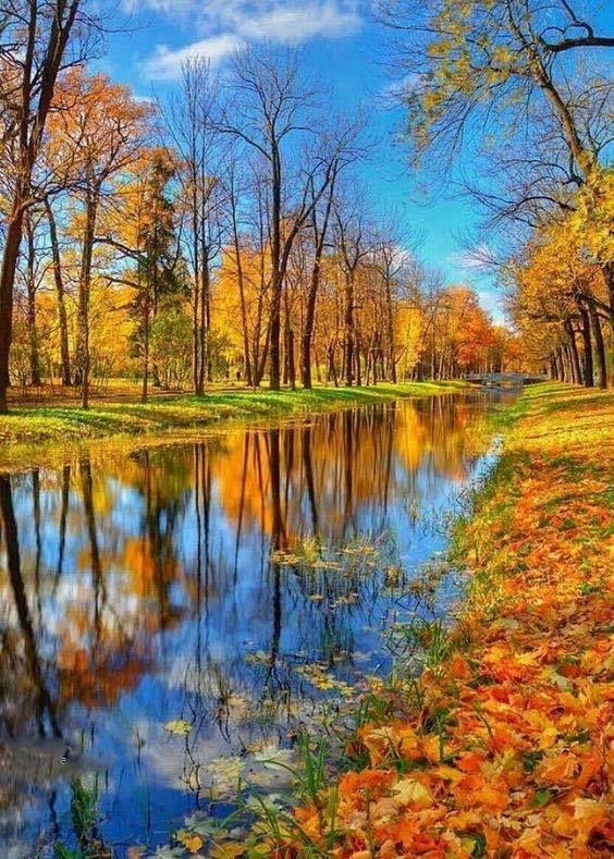 foto de Automne (avec images)   Paysage automne, Paysage automnal