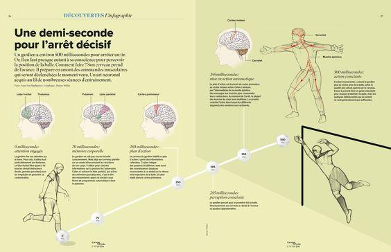 Un gardien a environ 500millisecondes pour arrêter un tir. Or, il en faut presque autant à sa conscience pour percevoir la position de la balle. Comment faire? Son cerveau prend de l'avance. Il prépare en amont des commandes musculaires qui seront déclenchées le moment venu. Un art neuronal acquis au fil de nombreuses séances d'entraînement.