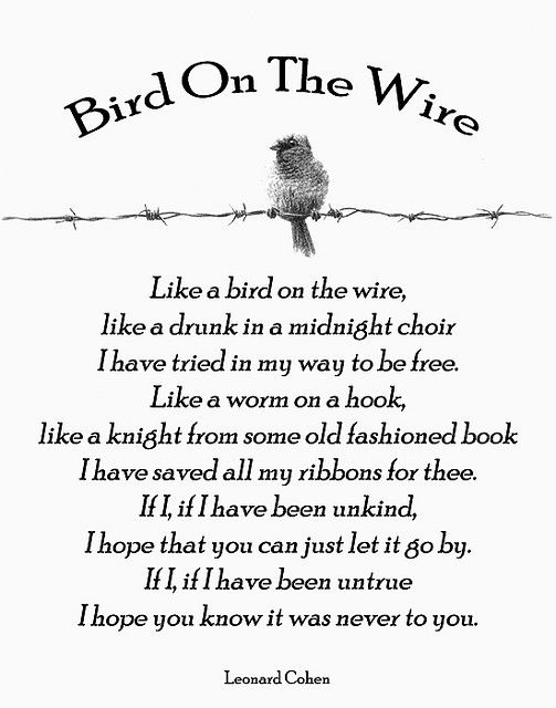 Remember this, Lyrics and Birds on Pinterest