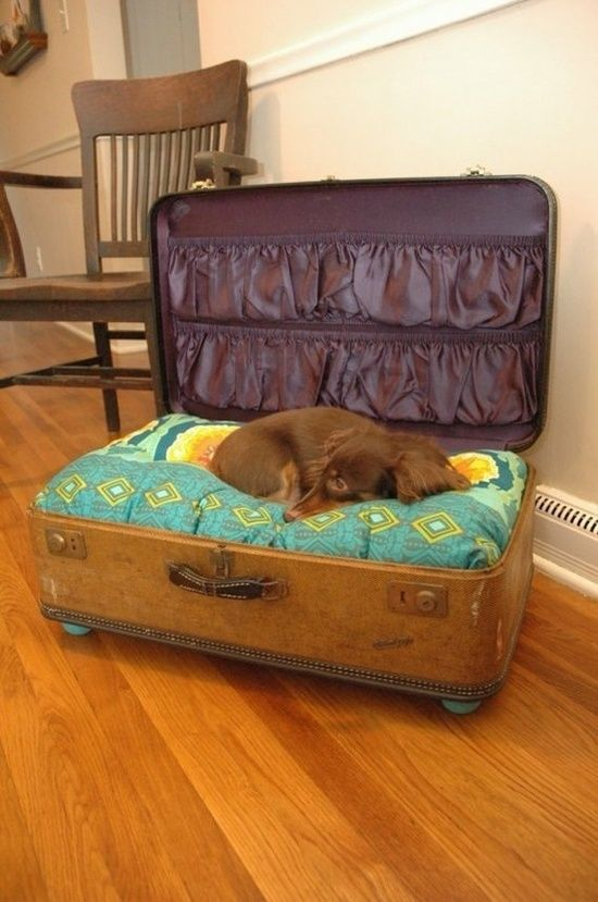 What a cute idea! Take an old suitcase (scrounge out fantastic vintage leather ones art flea markets/garage sales and EBay) and turn it into a pet bed!! Depending on size, cover a regular bed-pillow, or find a dog pillow that will fit. If none of those work, make a simple pillow to fit, stuff with filler from craft store.