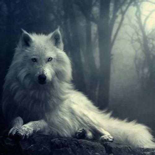 The Alpha And His Luna Wolf Pack Beautiful Wolves Dire Wolf