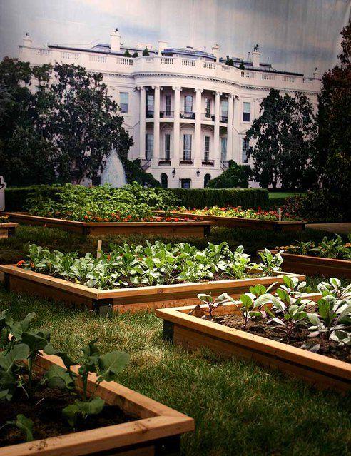 Michelle Obama's White House Kitchen Garden Book is Not For Gardeners : TreeHugger: