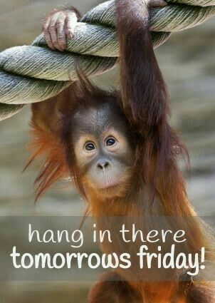 Hang in there. Tomorrow's Friday.