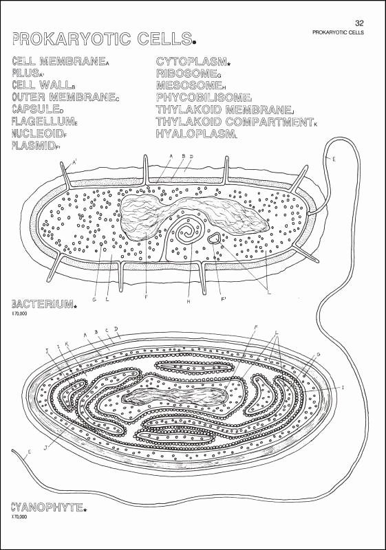 The Biology Coloring Book Beautiful Biology Coloring Book Harpercollins Rainbow Resource Stress Coloring Book Anatomy Coloring Book Coloring Books