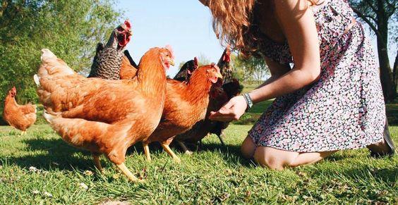 Waarom veganisten 'nee' zeggen tegen: Eieren