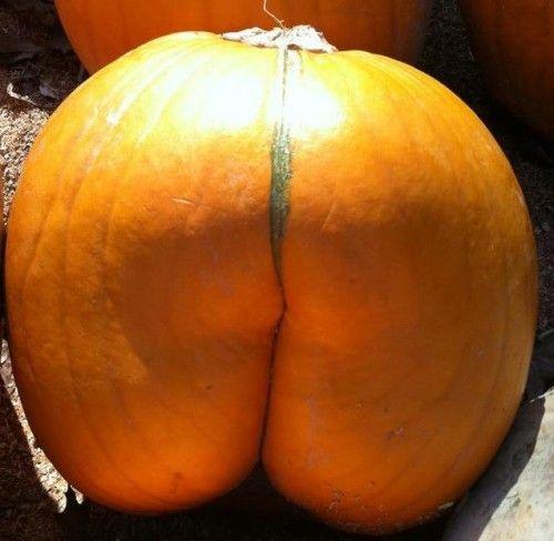 Vids free pumpkin ass