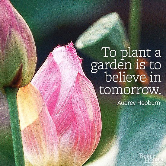 """To plant a garden is to believe in tomorrow."" -Audrey Hepburn:"