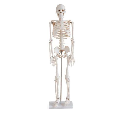 Modele-de-Squelette-Humain-Squelette-Anatomique