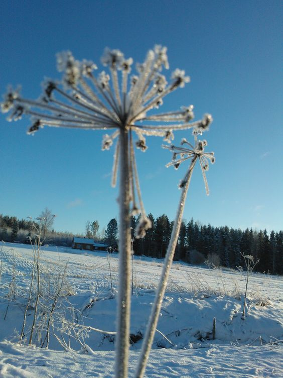 Winter can be so beautiful flowertime